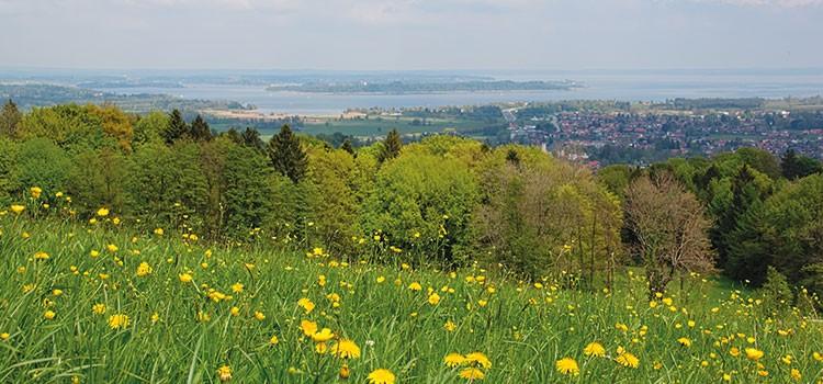 Sommerwiese Berg